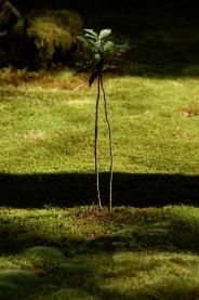 Petit arbre Kokedera