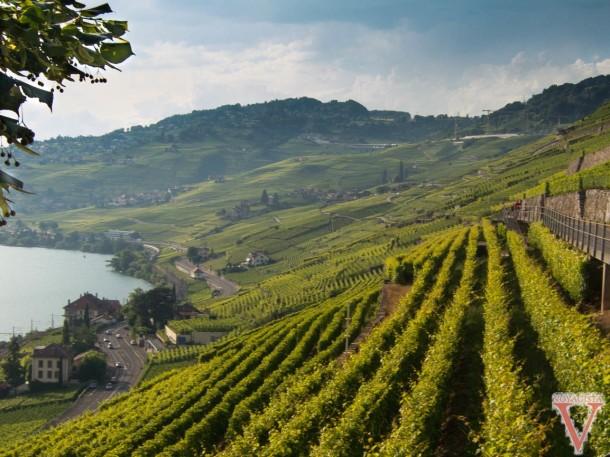 Switzerland Lavaux