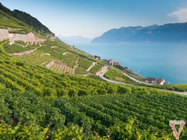 lavaux vineyards in Switzerland
